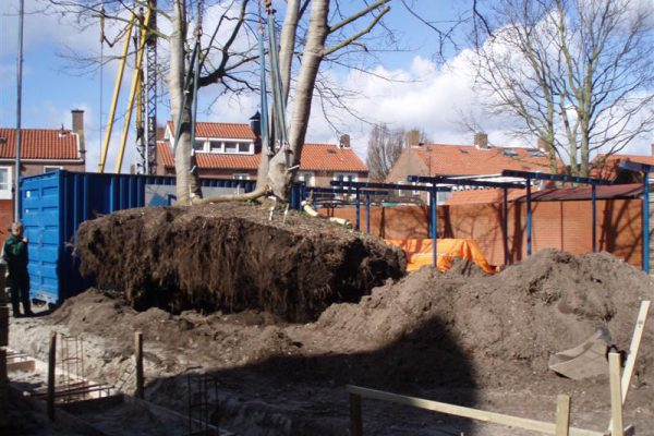 Verplanting boom